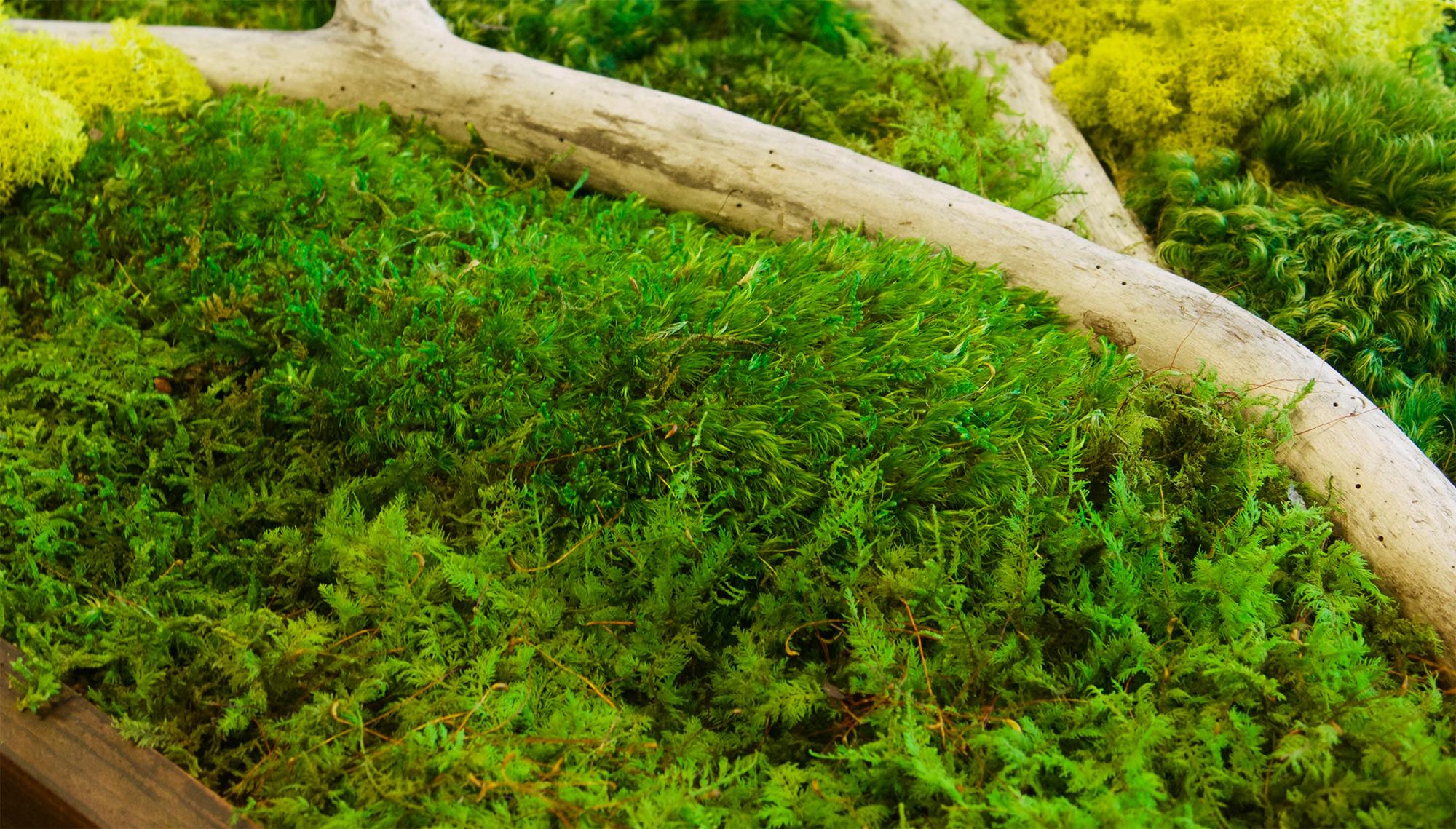 ... Moss Wall Art 18x36 ...