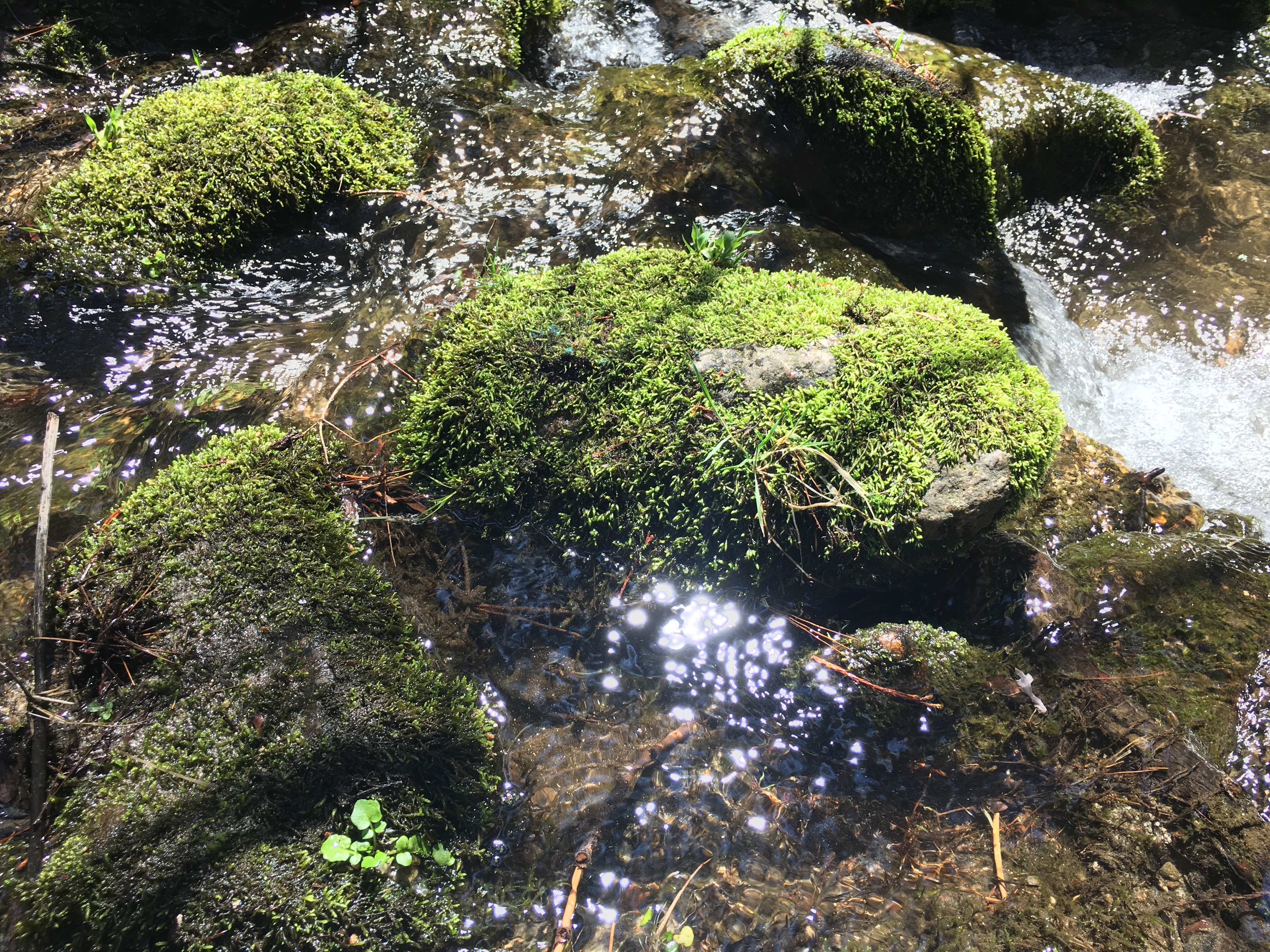 Stream in Sierra's with moss and sunlight