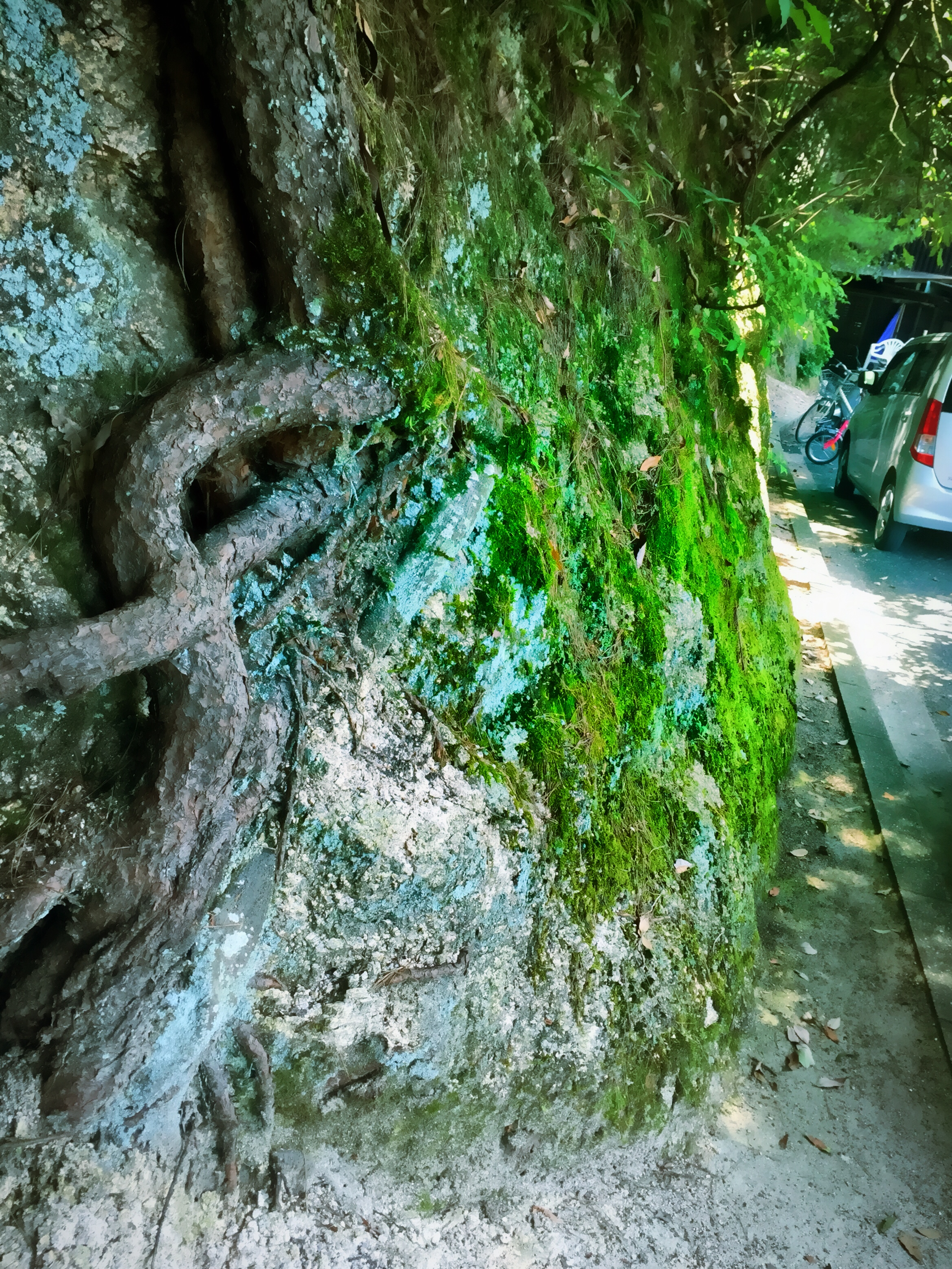 Miyajima Nature Moss Cement Walk
