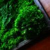 moss wall art 14x12