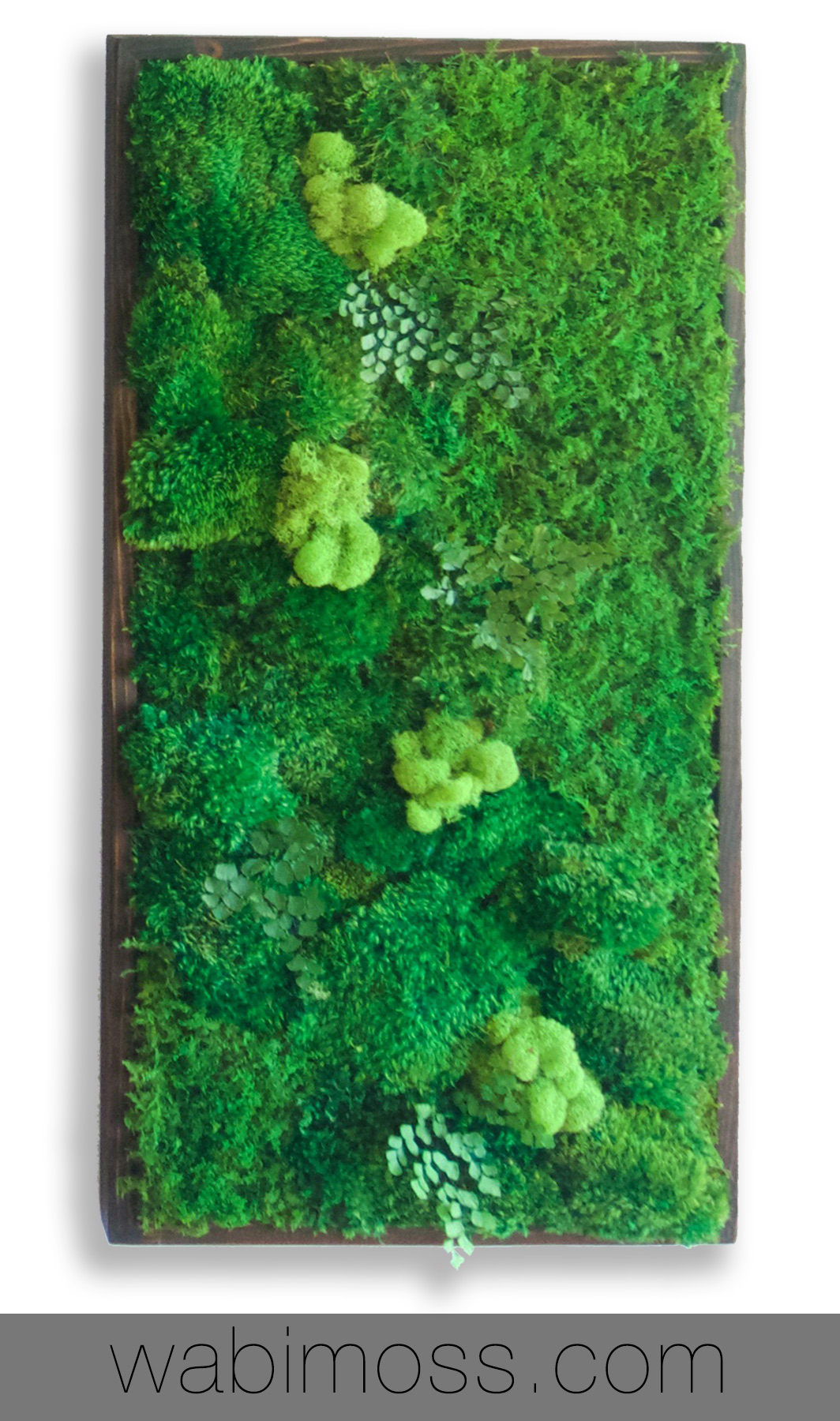Plant Wall Painting