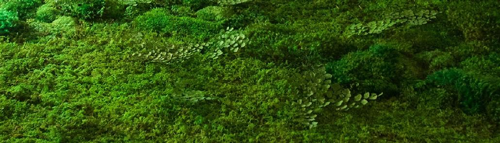 moss art field