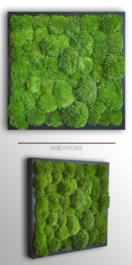 pole moss, bun moss, cushion moss, artwork