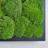 cushion moss, pole moss