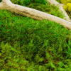 Moss Wall Art 18x36