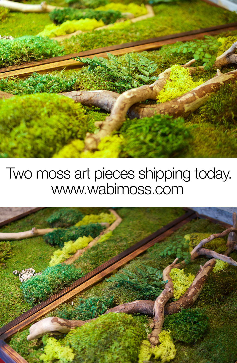 Two moss wall art pieces that we are shipping today.