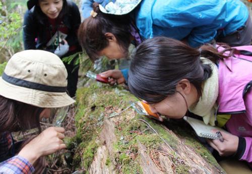 Moss Girls Japan
