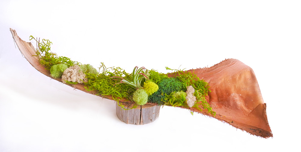 Palm Spathes Centerpiece Moss Art, moss art, moss, air plant, air plant care, how to care for air plant