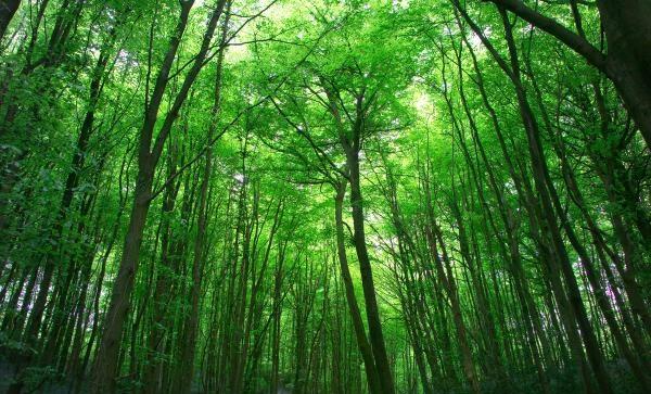 Forest Healing