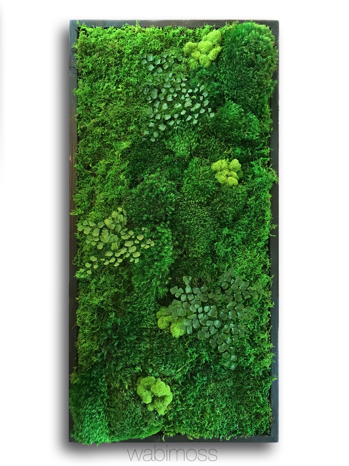 """58x58"""" Real Preserved Moss Wall Art Green Wall Collage No ..."""