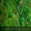 moss wall art 54x36
