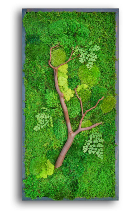 moss and manzanita