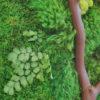 manzanita and ferns and moss